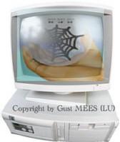 Les statistiques de l'Internet Monitor au 05.06.2006